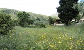 Παραθαλάσσιο Αγροτεμάχιο στην Λευκάδα Κωδικός:1196